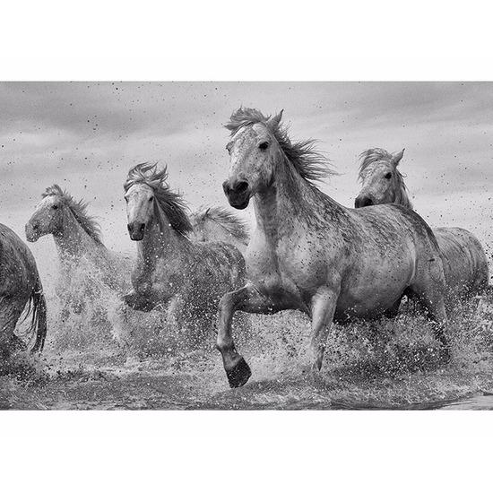 Poster Camargue paarden 91 x 61 cm