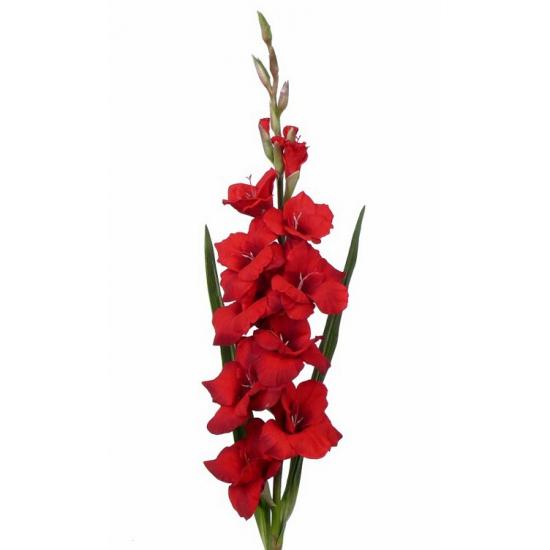 /feest-verjaardag-art/thema-feestartikelen/sinterklaas/surprises-materiaal/decoratie-materiaal/kunstbloemen--planten/kunstbloemen/alle-kleuren-soorten-kunstbloemen
