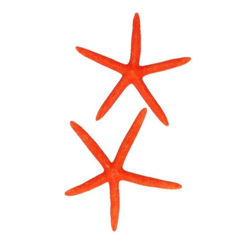 Woondecoratie zeesterren oranje